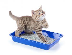 Kedi Kumu Çeşitleri | Petzz Blog