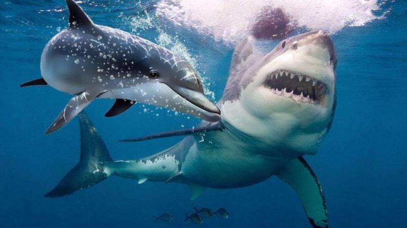 Yunus balığı köpek balığı